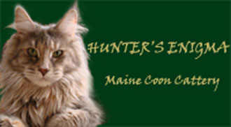 Hunters Enigma Maine Coons